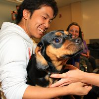 BARK UBC, therapy dogs
