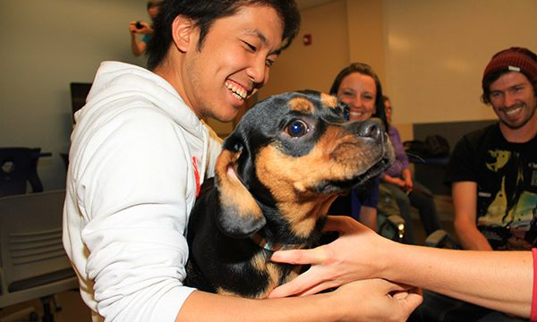 Therapy dogs help students combat stress